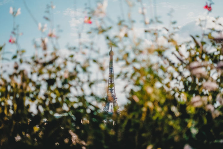 View of eiffel tower hidden by nature