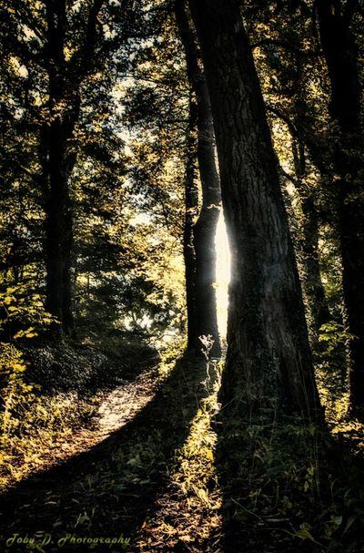 Stadtpark Anfang herbst 2012 Landscape