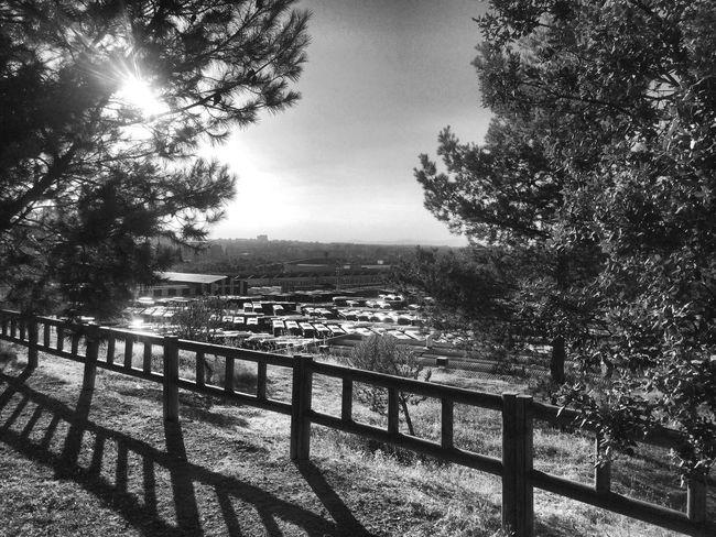 Paseos en Blancoynegro Garden Photography España Photography Madrid MadridvsJuananGR Emt Entrevias Vallecas SPAIN Black And White Blackandwhite Photography Black & White