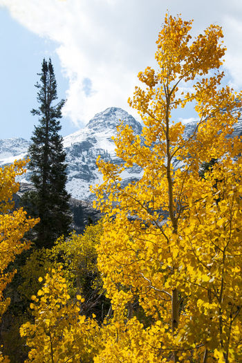 Yellow flowering plants by trees against sky during autumn