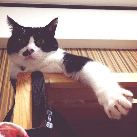 なんや? うちの猫 Cat