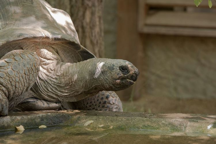 Close-up of turtle