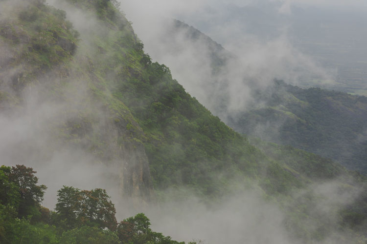 Aerial view of rain forest