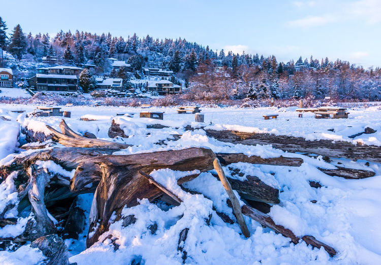 Snow driftwood and homes at Normandy Park, Washington. Winter Cold Temperature Snow Tree Nature Tranquility Covering Beauty In Nature Sky Tranquil Scene Frozen Scenics - Nature Day No People Plant White Color Land Environment Field Outdoors
