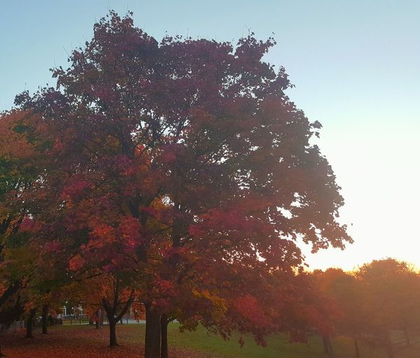 Pause.. Fall Beauty Fall Leaves Morning Walk Yyz Toronto