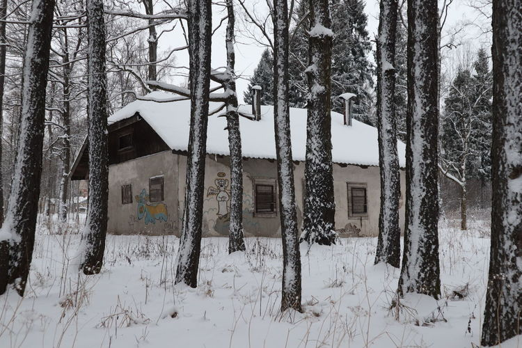 Tree Winter Snow Cold Temperature Trunk Plant Tree Trunk Built Structure Land Nature Building Exterior Architecture No People Day Tranquility Building White Color Covering Outdoors Snowing
