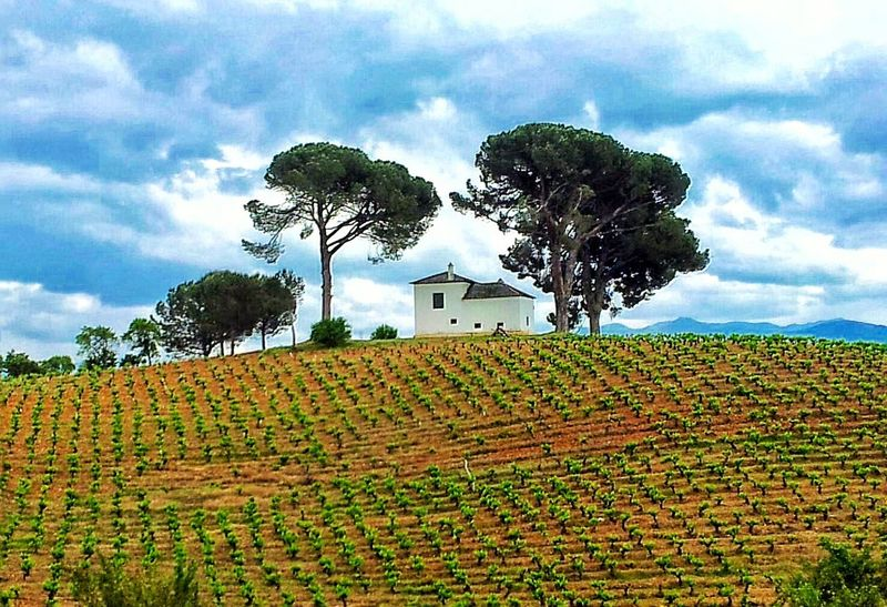 SPAIN O Cebreiro Mountain View Landscape Landscape_Collection Landscape_photography Landscapes Landscape #Nature #photography Landscape_lovers Landscape Photography Beautifully Organized