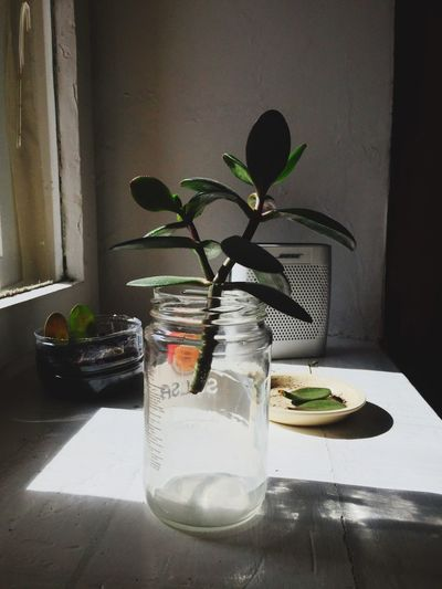 Indoors  Plant Table No People Vase Nature Leaf Home Interior Food And Drink Container Plant Part Flower Still Life Glass - Material Close-up Freshness Day Glass