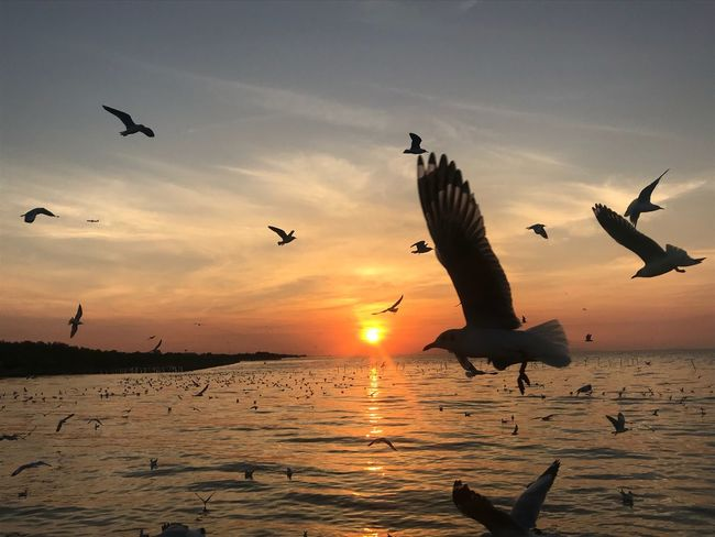 Flying Sunset Bird Animal Themes Animals In The Wild Spread Wings Mid-air Nature Silhouette Beauty In Nature Sky Seagull