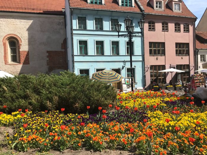 Riga Church Tourisme Tourist Building Exterior Flower Flowering Plant Built Structure Architecture Plant Building Residential District Growth Orange Color Window Freshness Nature Day Beauty In Nature Vulnerability  Fragility No People Outdoors City