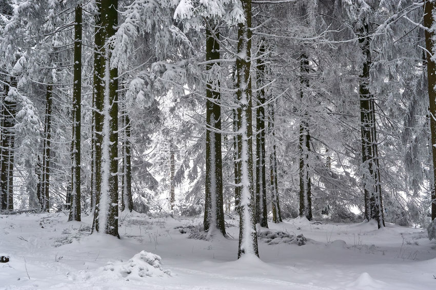 Beauty In Nature Cold Temperature Day Forest Landscape Nature No People Outdoors Scenics Snow Tranquil Scene Tranquility Tree Weather Winter