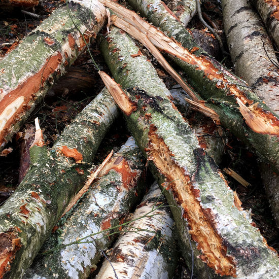 Abstract Art Backgrounds Brown Close-up Day Daylight Deforestation Fine Art Fine Art Photography Forest Green Heap Kunst Log Nature No People Orange Color Outdoors Red Stack Timber Wolskartin Wood Wood - Material