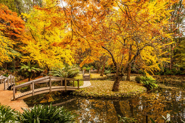 Scenic pond with wooden bridges in Autumn in Australia Alfred Nicholas Dandenong  Footbridge Forest Memorial Park Plant Australia Autumn Beautiful Bridge Bright Colorful Decorative Environment Fall Ferns Ferntree Filter Foliage Gardens Golden Green Lake Leaves Light Melbourne Natural Nature Outdoor Pond Ranges Reflection Relaxing Rural Scene Scenic Season  Tranquil Travel Tree Tropical Vibrant Victoria Vintage Warm Wooden Yellow