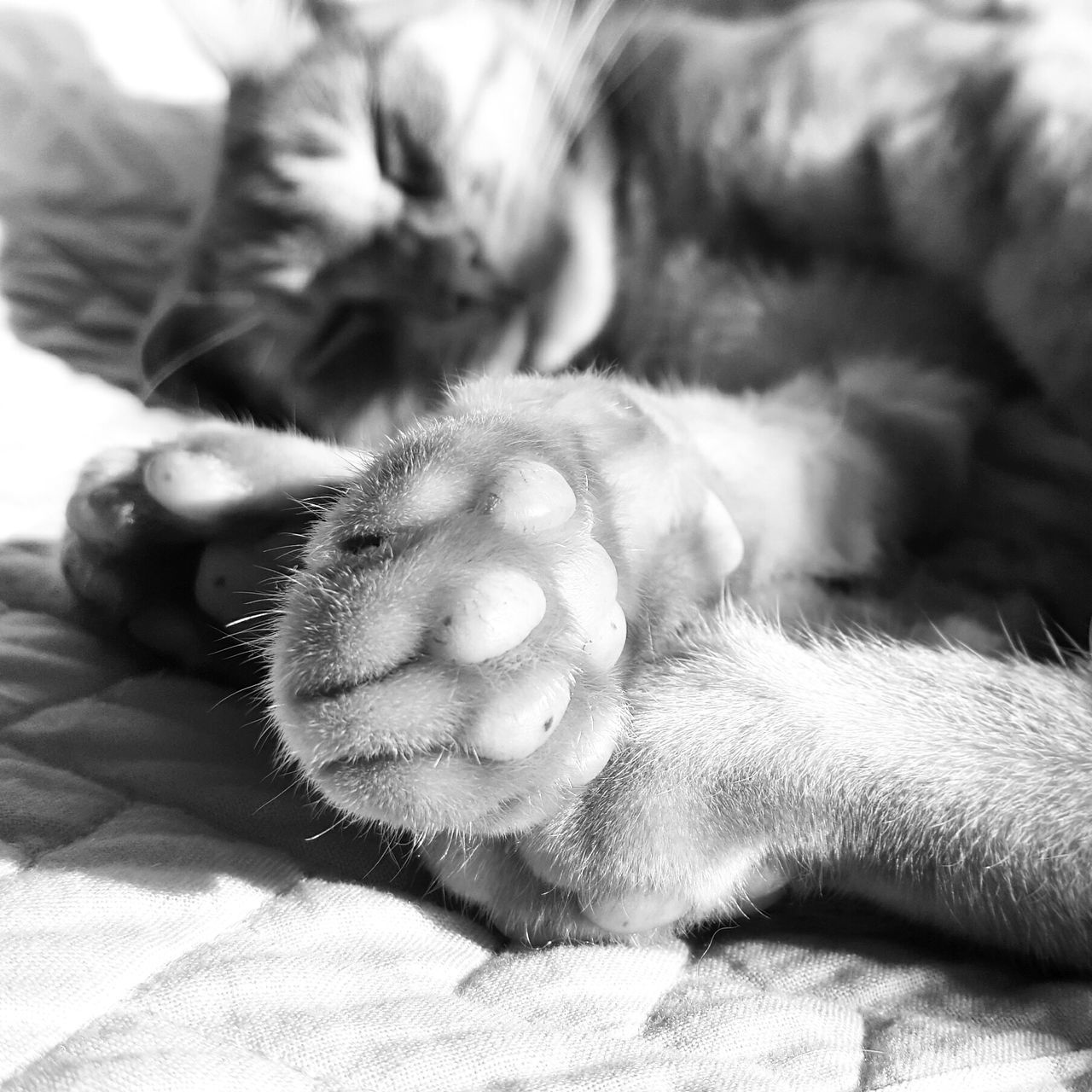 mammal, animal, domestic, animal themes, domestic animals, pets, one animal, relaxation, bed, cat, vertebrate, feline, domestic cat, furniture, close-up, resting, no people, indoors, sleeping, lying down, whisker, animal leg, animal head