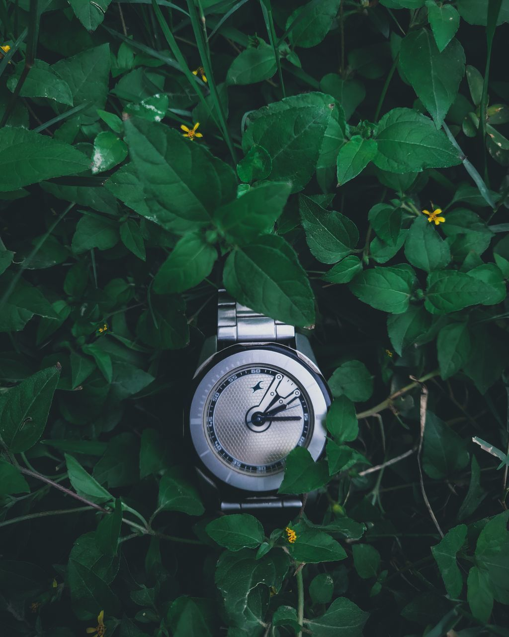 HIGH ANGLE VIEW OF CLOCK ON GREEN PLANT