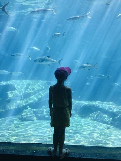 Rear view of man standing in aquarium