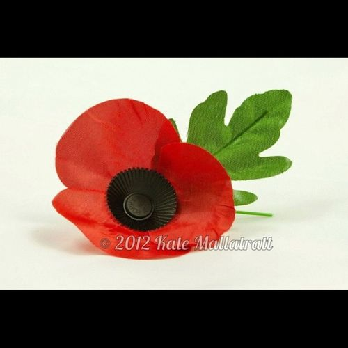 Squaready Photo365 Photooftheday Poppy Poppyday Remembrance Heros Poppyappeal Flower K8marieuk Igers Instagrammers Canoneos450D Canon Lighttent