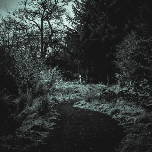 Do you dare? Adventure Anxiety  Apprehension Cold Dark Dread Fear Foreboding Forest Grass Intresting Mystery Nature Nervous No People Path Suspense Tension Tranquility Tree Unease Walk Walk Way Winter Worry