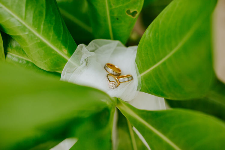 engagement and wedding ring on beach sand Green Color Nature No People Leaf Plant Part Close-up Selective Focus Macro Ring Rings 💍 Wedding Engagement Ring Wedding Ring Flower Beach Sand Backgrounds Celebration Macro Photography