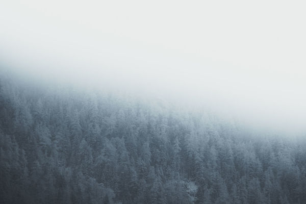 Frosty forest during a snowstorm. 1/3 Location: Alps, Germany. Equipment: Fujifilm X-T2 + XF18-135 Alps Backgrounds Beauty In Nature Blizzard Cold Temperature Environment Fog Forest Hill Land Nature No People Outdoors Plant Scenics - Nature Sky Smog Snowstorm Softness Textured Effect Tranquil Scene Tranquility Tree Winter WoodLand The Great Outdoors - 2018 EyeEm Awards