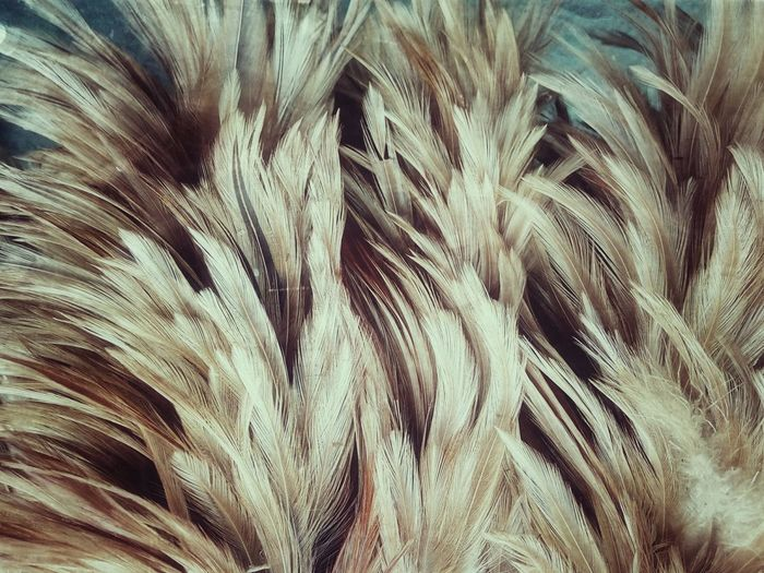Feather  Feathers Feather Collection Nature Abstract Abstract Close Up Close Up Photography Art Nature Art Nature Art Photography Imagination Imagination Photography Imagination Collection Feather Art Feather Color Colorful Feather