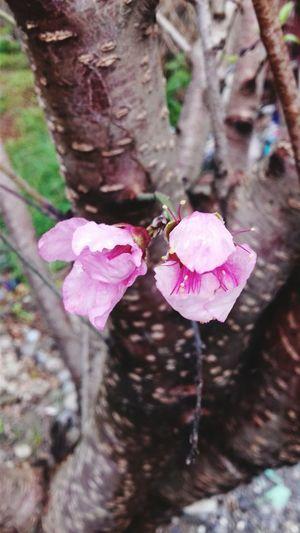 Flores árbol Flowers Mexico Nature Plant Plants Matamoros Tamaultimas