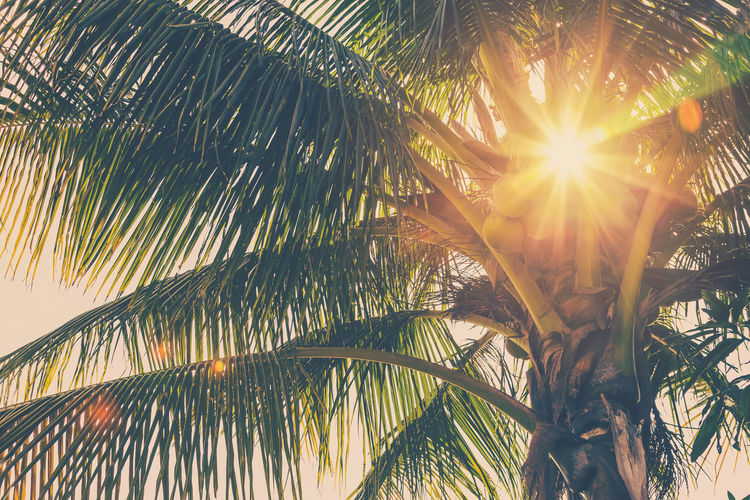 Palm Tree Tropical Climate Sunlight Tree Beauty In Nature Leaf Plant Palm Leaf Nature Growth No People Low Angle View Sky Sun Tranquility Lens Flare Plant Part Sunbeam Outdoors Day Coconut Palm Tree Tropical Tree Leaves