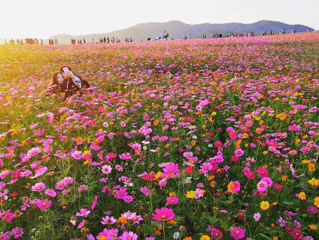cosmos of love Love Flowers Couple Cosmos Flower Pink White