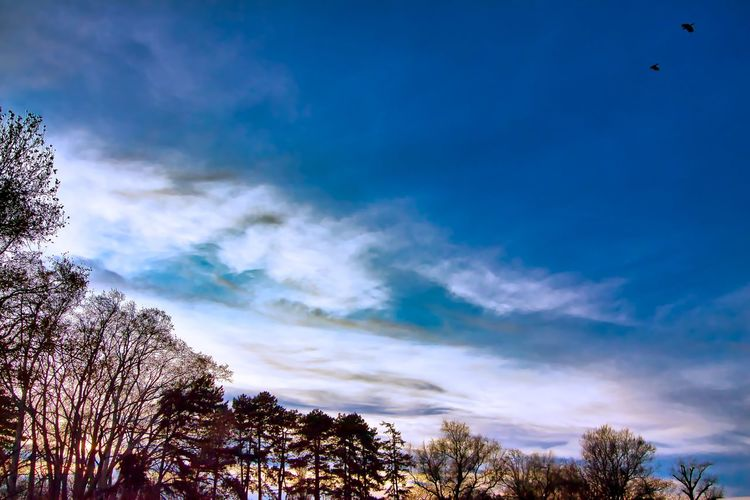 Low angle view of silhouette trees against blue sky