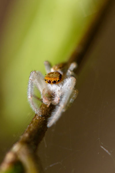 Beauty In Nature Branch Close-up Closeup Spider Insect Macro Macro Spider Micro Insect Nature Outdoor Outdoors Spider Spider On A Branch Stick Tiny Spider White And Yellow Spider Wildlife Wildlife & Nature