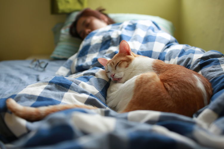 Cat sleeping with woman on bed at home