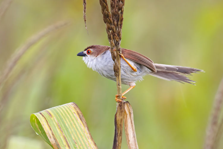 Animal Themes Animal Animals In The Wild Bird Animal Wildlife Vertebrate One Animal Focus On Foreground Perching Day No People Close-up Nature Plant Outdoors Sparrow Beauty In Nature Songbird  Looking Side View