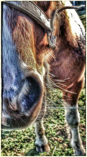 was ein Organ...Horsepower EyeEmBestEdits Get Closer
