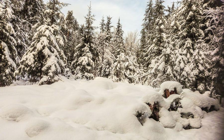 Winterwald Landscape Hofis Landschaften Best Shots Hofi Forest Winterwald Beauty In Nature Winter Wonderland Winter Stimmungsbild Hofi Snow Trees Nadelbäume Voll Schnee Motion Leisure Activity Outdoors Nature Shades Of Winter