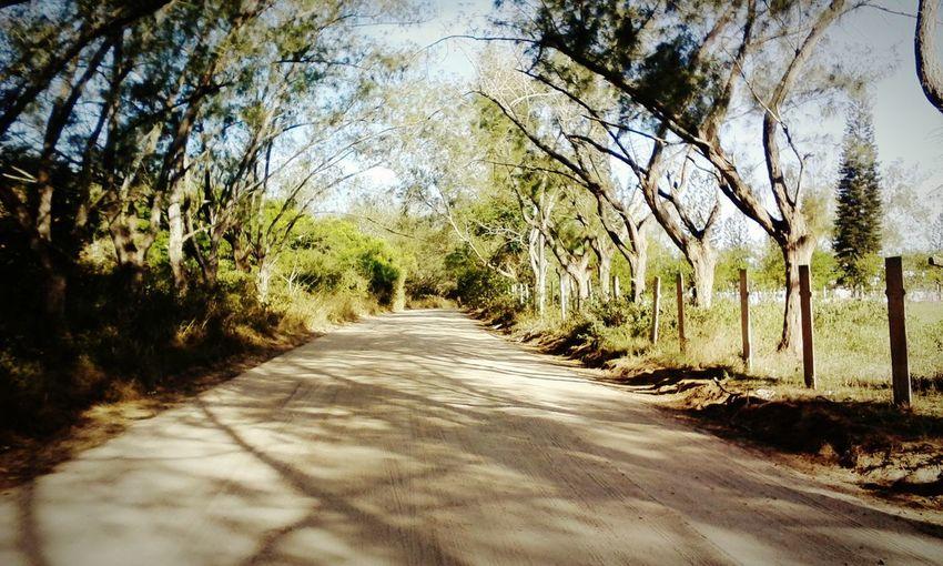 Tree Road Diminishing Perspective Sky Landscape