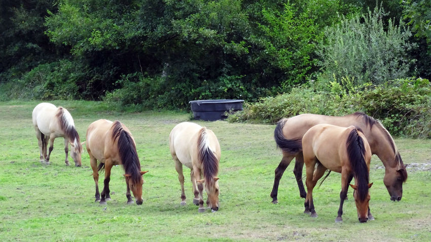 group of horse five walking Grazing group of animal water container outdoor horses photography In Fran Eyeem Best Shots - Horses Premium Group Of Horse Five Walking Grazing Group Of Animal Water Container Outdoor Horses Photography