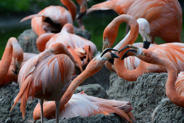 Flamingoes on rock formations