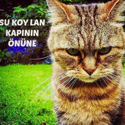 Fotoğraf alıntıdır , bu konuyu mizahla işleyen kardeşlere çok teşekkürler, elinize ve zekanıza sağlık.. Çok güzel ... ;)) Unutmayalım hayvanların kendilerini ifade edebilecekleri bir dili yok... Kedi Kedim  Can Canlarım Hayvansevgisi Hayvanlarıkoruyalım Hayvanlarısevelim Hayvanlarisevin Sevgi Saygı Hayatasaygı Yasam Yardım Animal Lovers Animal Cats_arround Cat Catstagram Save_animals Rescue Help Love Savethenature YouAreNotAlone Wearenotalone instagram_turkey instadaily insta_people instamood