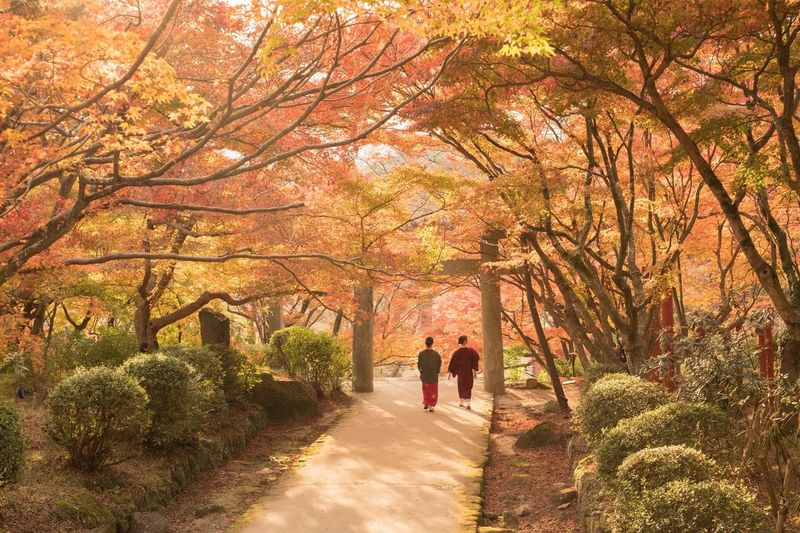 Autumn Japan Autumn Two People Real People Walking Beauty In Nature Japanese Garden My Favorite Place Eye Em Nature Lover