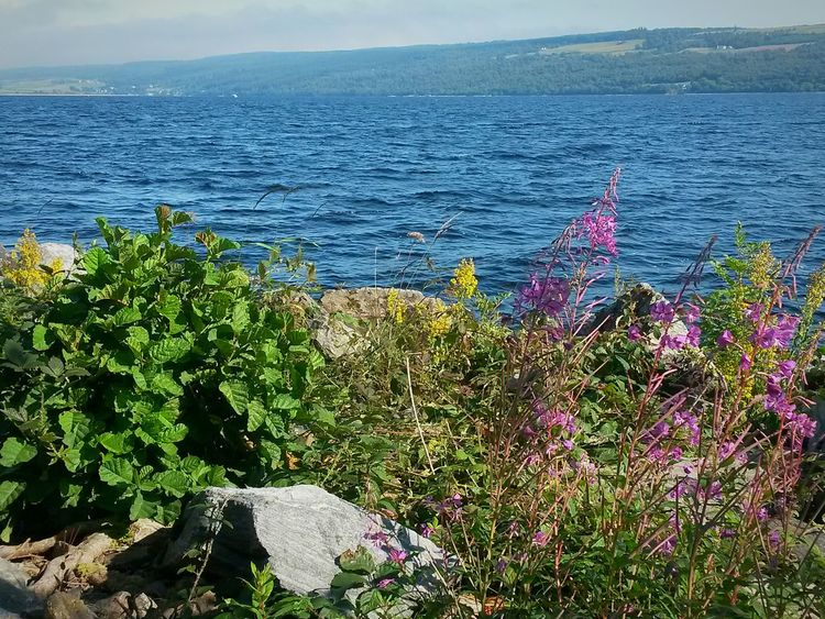 Growth Nature Day Scenics Water Outdoors Lake Lakeshore Loch Ness Loch  Scotland Sunny Day Summer Days Blue Water Water And Flower Lake And Green