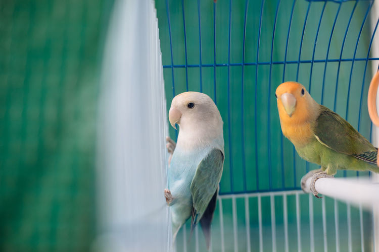 View of parrot in cage