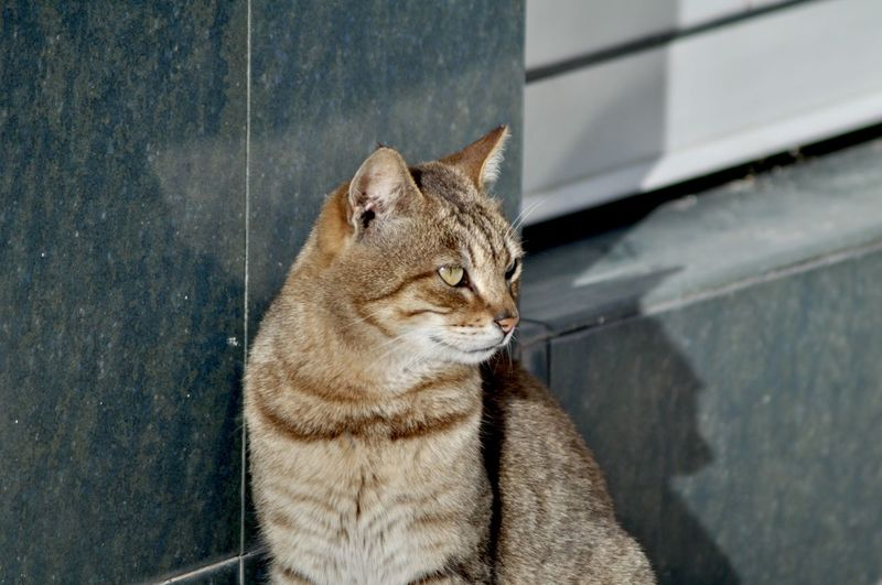 Cat Feline Pets Domestic Domestic Cat Domestic Animals Mammal One Animal Animal