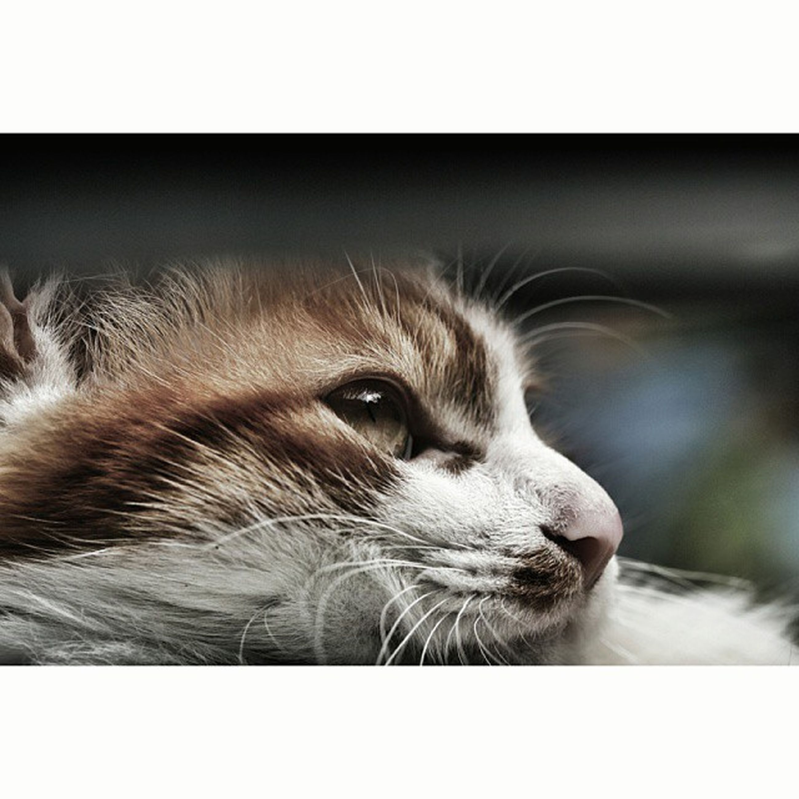 transfer print, animal themes, one animal, auto post production filter, pets, domestic cat, mammal, cat, domestic animals, feline, close-up, animal head, indoors, whisker, animal body part, focus on foreground, looking away, zoology, relaxation, vertebrate