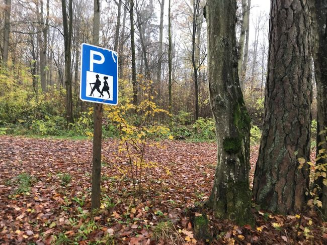 Autumn Change Communication Day Direction Forest Guidance Information Information Sign Land Leaf Nature No People Outdoors Plant Plant Part Road Road Sign Sign Tree Tree Trunk Trunk WoodLand