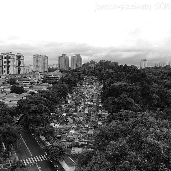 Cemetery Neighborhood Zonasul Saopaulo Brasil Super_saopaulo Icu_brazil Ig_mood Saopaulo_originals Saopaulowalk Ig_brazil Sp4you Sp360graus Spdagaroa Mybeautifulsp Splovers Olhar_brasil Olhardesp Nasruasdesp011 Ig_contrast_bnw Amateurs_bnw Bnwmood Bnw_kings Bnw_planet Bnw_captures top_bnw paulistanobw bnw_lombardia instapicten