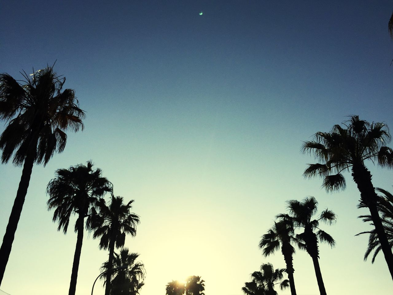 palm tree, tree, beauty in nature, low angle view, nature, tranquility, scenics, silhouette, growth, sky, tree trunk, clear sky, tranquil scene, no people, sunset, outdoors, moon, day