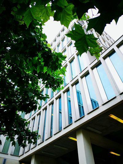 #architecture #paris #huaweip20pro Modern Green Blue High School Tree Architecture