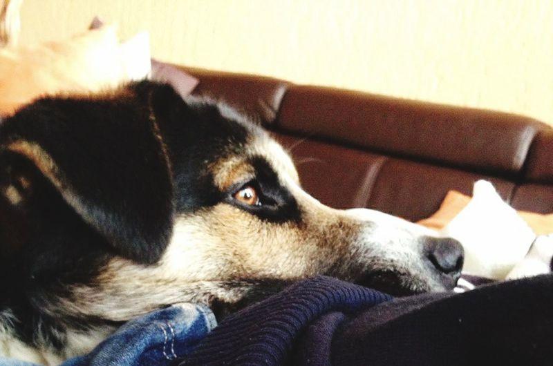 My angel! :) begging for food :) Mydog♡ Myguardianangel Morning Moments Beautiful Eyes Love