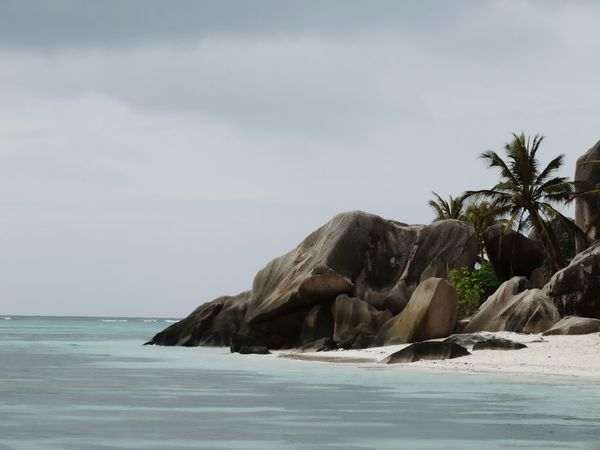 Sea Beach Palm Tree Nature Sand No People Water Day Outdoors Beauty In Nature Tree Sky La Digue Exotic Island Rock Formations Seychelles Seychelles Islands Beauty In Nature Tropical Paradise Coconut Palm Tree Travel Travel Destnations Heaven On Earth Freshness Anse Source D'argent Sommergefühle