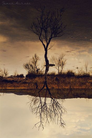 Bare Tree Tree Nature Branch Tranquil Scene Tranquility Reflection Lone Water No People Sky Tree Trunk Scenics Landscape Outdoors Isolated Day